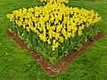 Tulip 1300176.jpg