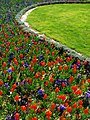 Tulips 09148.jpg