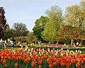 Tulips in Washington Park.jpg