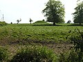 Tumulus or Mill Mound - geograph.org.uk - 430667.jpg