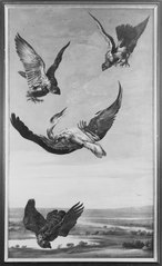 Two Falcons and a Goshawk Attacking a Heron