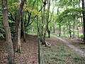 Two Trails through the woods at Buckland Hoo - geograph.org.uk - 1542694.jpg