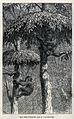 Two chimpanzees sheltering in trees. Wood engraving by J W W Wellcome V0021466.jpg