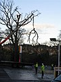 Two hours in the life and death of an oak tree (2) - geograph.org.uk - 1056146.jpg