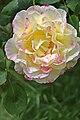 US-CA-Sacramento-GardenFlower-2012-04-18T13-22-30.jpg