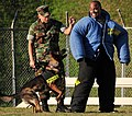 US Navy 081113-N-0807W-288 Fleet Activities Sasebo Security Officer, Lt. j.g. Franklin Brown, right, braces himself as dog handler patrolman Master-at-Arms 2nd Class Rueben J. Davis Jr. commands his military working dog to atta.jpg