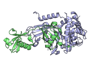 Deubiquitinating enzyme