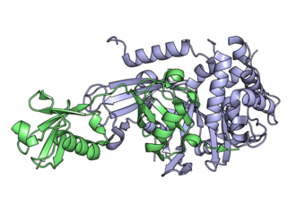 Deubiquitinating enzyme - USP21 (blue) covalently linked to linear diubiquitin aldehyde (green). The C-terminus of the ubiquitin protrudes through the active site of USP21 (lower right).