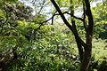 Understory - Institute for Nature Study, Tokyo - DSC02146.JPG