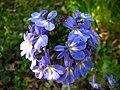 Unidentified flower in yard.jpg