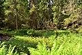 Valdai Forest Thicket.jpg