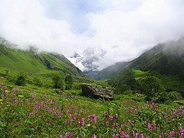 De Valley of Flowers in Westelijk-Himalaya