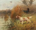 Victor Marcou - Pointer on a Duck Hunt.jpg
