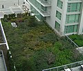 Victoria BC Marriott green roof.jpg