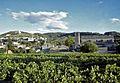 Vignoble de Vaison-la-Romaine.jpg