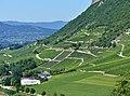 Vignobles de Montmélian vus du Rocher (août 2017).JPG