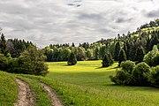 Villach Federaun Federauner Strasse Mischwald SW-Ansicht 10052017 8316.jpg