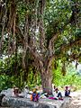 Villagers under the Banyan Tree (30356944301).jpg