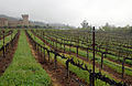 Vineyards at Castello di Amorosa.jpg