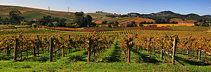 English: Vineyards in Napa Valley. Français : ...
