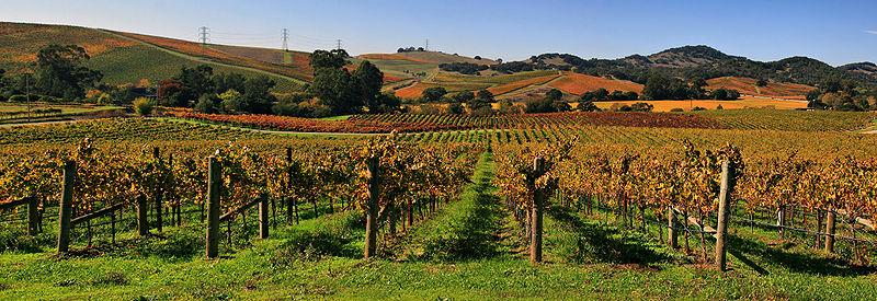 File:Vineyards in Napa Valley 7.jpg