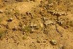 Voie expérimentale de l'Aérotrain le 1er mai 2012 à Limours Algues 01.jpg