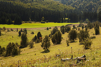 Calcareous grassland - Image: Wacholderheide Digelfeld NSG Schwaebische Alb