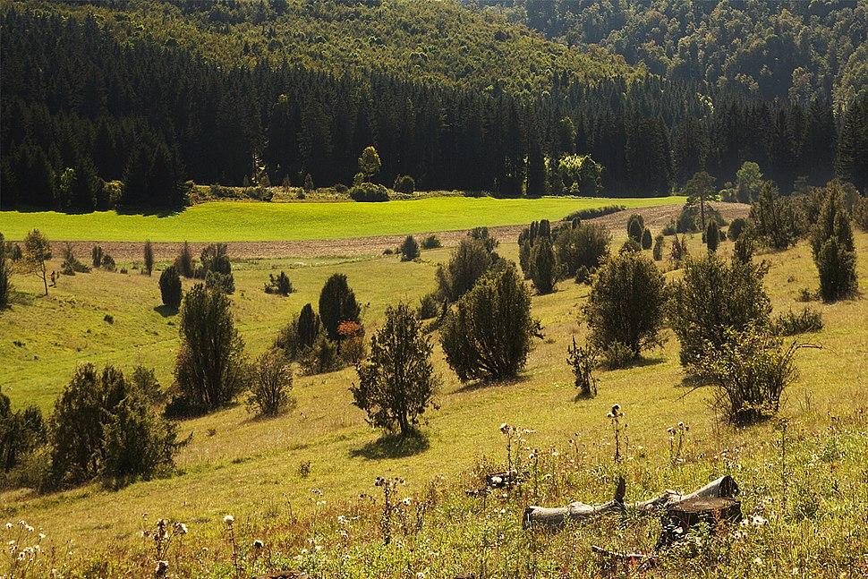 Wacholderheide Digelfeld NSG Schwaebische- Alb
