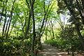 Walkway - Institute for Nature Study, Tokyo - DSC02113.JPG