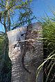 Wall Lizard by Daren Greenhow (2872101931).jpg
