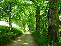 Wanderweg von Buchenau nach Frauenau.JPG