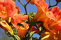 Wasp And Flowers (167527983).jpeg