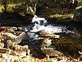 Wasserlauf der Wolfsteiner Ohe.jpg