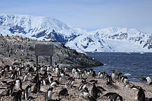 Waterboat Point, Antarctica.jpg