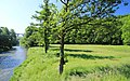 Weiße Elster bei Barthmühle 2H1A3109WI.jpg