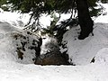 Wernigerode, Germany - panoramio - Eugeniy Meshcheryako… (93).jpg