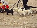 West Lancs dog display team, Southport 16.JPG