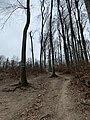 Wiener Wald 18 49 50 358000.jpeg