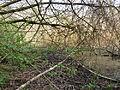 Wienerberg-pond natural3v4.JPG
