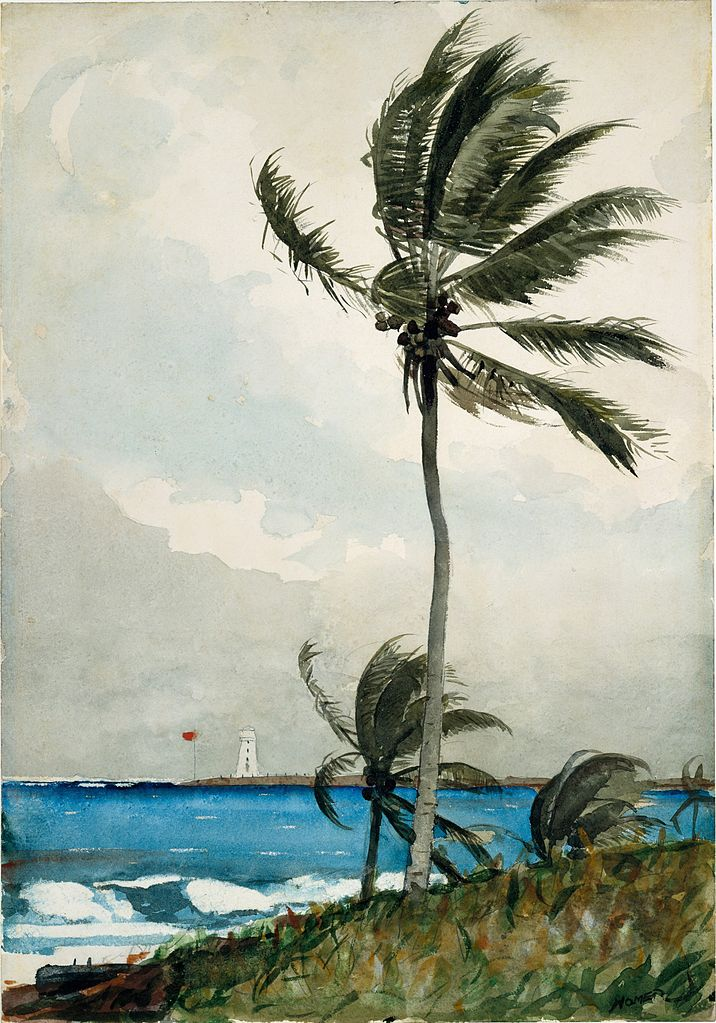 File Winslow Homer Palm Tree Nassau Jpg Wikimedia Commons
