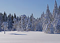 Winter forest (4348808591).jpg