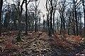 Winter forest in Fagne Tirifaye, Waimes, Belgium (VeloRoute intersection 83-to-84, DSCF3676-DSCF3678).jpg