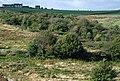 Wooded valley below Owler Bar - geograph.org.uk - 552171.jpg
