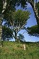 Woodland, Taynish - geograph.org.uk - 469515.jpg