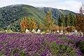 Wuling camping area 武陵露營區 - panoramio (1).jpg
