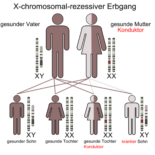 X-chromosomal-rezessive-Mutter