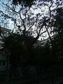 Xicranda del carrer Alfons XII P1510352.jpg