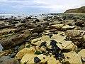 Yellow sandstone and brown rocks - geograph.org.uk - 1537473.jpg