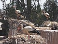Yes^ and today is cheer conversation about cleaning our nests^ .. - panoramio.jpg