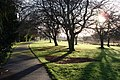 Young's Park - Brilliant sunshine through the trees - geograph.org.uk - 645910.jpg